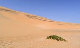 Έρημος Namib στη Ναμίμπια Στοκ Εικόνες