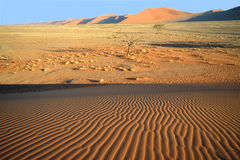 έρημος namib Στοκ Εικόνες