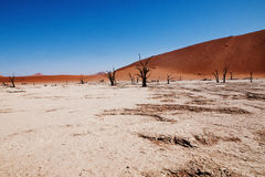 έρημος namib Στοκ Φωτογραφίες