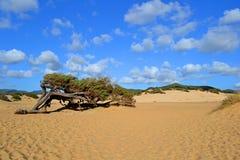 Έρημος Piscinas και δέντρο, Ιταλία Στοκ φωτογραφίες με δικαίωμα ελεύθερης χρήσης