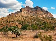 Έρημος Sonora Στοκ Φωτογραφία