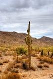 Έρημος Sonora Στοκ εικόνες με δικαίωμα ελεύθερης χρήσης
