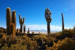 Έρημος Uyuni λόφων κάκτων Incahuasi Στοκ Εικόνες