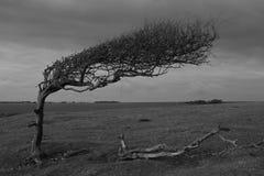 έρημο δέντρο Στοκ εικόνα με δικαίωμα ελεύθερης χρήσης