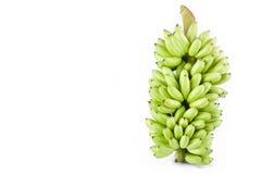δέσμη της φρέσκιας ακατέργαστης γυναικείας Finger μπανάνας στα άσπρα τρόφιμα φρούτων μπανανών MAS Pisang υποβάθρου υγιή που απομο Στοκ Φωτογραφία