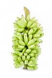 δέσμη των ακατέργαστων μπανανών αυγών στα άσπρα τρόφιμα φρούτων μπανανών MAS Pisang υποβάθρου υγιή που απομονώνονται Στοκ εικόνα με δικαίωμα ελεύθερης χρήσης
