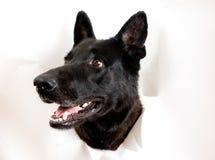 έσπασε το λευκό εγγράφου σκυλιών Στοκ εικόνα με δικαίωμα ελεύθερης χρήσης