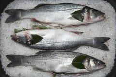 έτοιμα θαλασσινά μαγείρων Στοκ Εικόνα