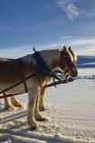 Έτοιμος να οδηγήσει Στοκ εικόνα με δικαίωμα ελεύθερης χρήσης