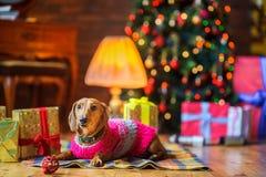Έτος του σκυλιού Στοκ Εικόνες
