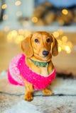 Έτος του σκυλιού Στοκ Εικόνα