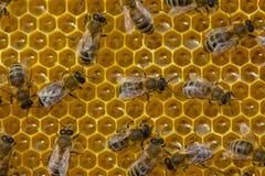 Έτσι είναι υγιές μέλι τροφίμων †« Στοκ φωτογραφίες με δικαίωμα ελεύθερης χρήσης