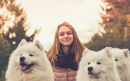 Έφηβη με τρία άσπρα σκυλιά Samoyed στοκ φωτογραφίες με δικαίωμα ελεύθερης χρήσης