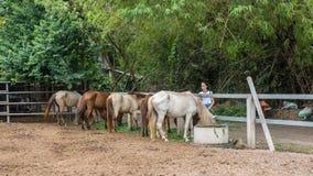 Έφηβος με πέντε άλογα που τρώνε στοκ φωτογραφία
