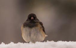 Έχω το χιόνι! Στοκ φωτογραφίες με δικαίωμα ελεύθερης χρήσης