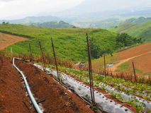 Έδαφος γεωργίας στοκ εικόνες με δικαίωμα ελεύθερης χρήσης