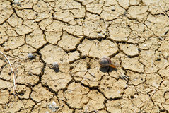Έδαφος ερήμων στο οποίο τα σαλιγκάρια σέρνονται στοκ εικόνα