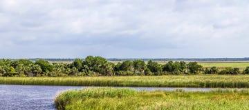Έδαφος ελών σε Apalachicola με τη χλόη καλάμων Στοκ Φωτογραφία