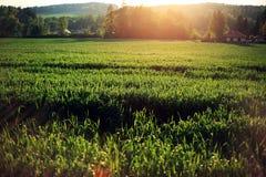 έδαφος ηλιόλουστο Στοκ εικόνα με δικαίωμα ελεύθερης χρήσης