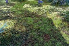Έδαφος κήπων που καλύπτεται από το πράσινο υπόβαθρο σύστασης βρύου αστεριών στοκ εικόνες