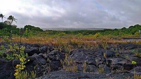 Έδαφος ροής λάβας Kalapana Στοκ φωτογραφία με δικαίωμα ελεύθερης χρήσης