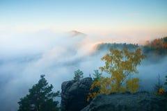 Έδαφος της ομίχλης Άποψη μέσω των κλάδων στην ονειροπόλο βαθιά misty κοιλάδα μέσα στη χαραυγή Ομιχλώδες και misty τοπίο πρωινού Στοκ Εικόνες