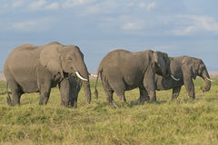 Έδαφος των ελεφάντων Στοκ εικόνα με δικαίωμα ελεύθερης χρήσης