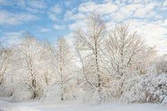 Έδαφος χειμερινής κατάπληξης - χιονώδη δέντρα Στοκ Εικόνες