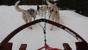 Έλκηθρο σκυλιών απόθεμα βίντεο