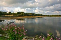 Έλος θαλασσινού νερού Στοκ Εικόνες