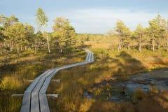 Έλος σε Kemeri Στοκ Φωτογραφίες