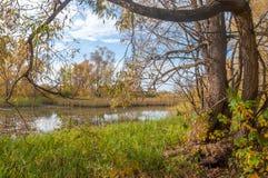 Έλος φθινοπώρου Ο κάλαμος αυξάνεται στο έλος Στοκ φωτογραφία με δικαίωμα ελεύθερης χρήσης