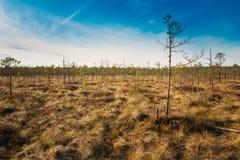 Έλος χλοώδες Νάνα δέντρα που αυξάνονται κοντά στο έλος έλους Στοκ Εικόνες