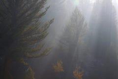 ήλιος ακτίνων πρωινού ομίχλης Στοκ φωτογραφία με δικαίωμα ελεύθερης χρήσης