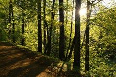 ήλιος ακτίνων Στοκ φωτογραφίες με δικαίωμα ελεύθερης χρήσης