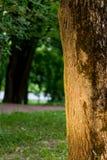 Ήλιος-ανάψοντα δέντρο στο δάσος Στοκ Εικόνα