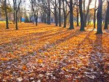 ήλιος ανόδου ακτίνων φυλ& Στοκ Εικόνες