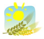 ήλιος αυτιών Στοκ εικόνες με δικαίωμα ελεύθερης χρήσης