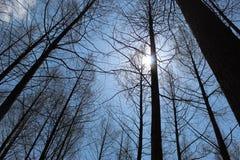 Ήλιος δέντρων Nami Στοκ Φωτογραφία