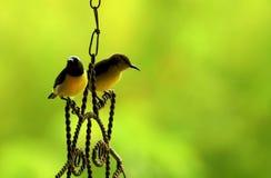 ήλιος ζευγών πουλιών Στοκ εικόνες με δικαίωμα ελεύθερης χρήσης