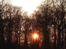 Ήλιος κάτω στα ξύλα Στοκ Εικόνα