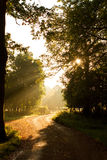 Ήλιος μέσω των δέντρων με το αγόρι στο μονοπάτι στοκ φωτογραφία