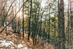 Ήλιος μέσω των δασικών δέντρων το χειμώνα Στοκ Φωτογραφία