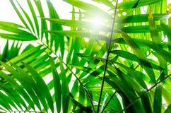 Ήλιος μέσω των φοινικών στοκ εικόνα με δικαίωμα ελεύθερης χρήσης
