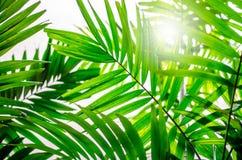 Ήλιος μέσω των φοινικών στοκ εικόνα