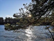 Ήλιος πίσω από τον κλάδο στοκ φωτογραφία με δικαίωμα ελεύθερης χρήσης