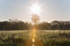 Ήλιος που αυξάνει πέρα από τις υψηλές χλόες με τη δροσιά πρωινού και τα δέντρα σε Spri στοκ φωτογραφίες