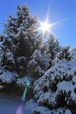 Ήλιος που κρυφοκοιτάζει πέρα από τα εφελκιδώδη δέντρα χιονιού Στοκ Εικόνες