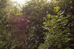 Ήλιος που λάμπει μέσω της δυνατής βροχής στοκ φωτογραφία
