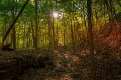 Ήλιος που λάμπει μέσω των δέντρων στο πράσινο δάσος Στοκ φωτογραφία με δικαίωμα ελεύθερης χρήσης